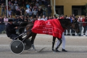 In Vitro Du Bourg wins Trotting Blue Riband